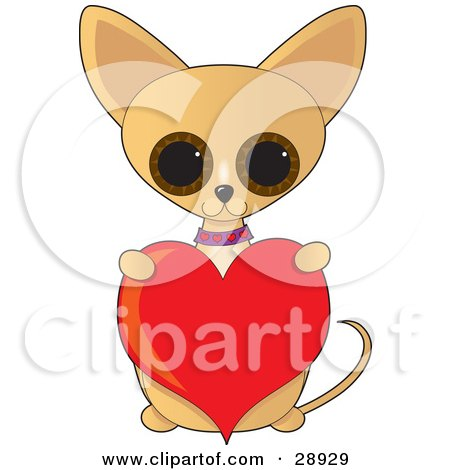 Adorable Big Eyed Tan Chihuahua Dog Sitting Up And Holding A Red Valentine Heart Posters, Art Prints