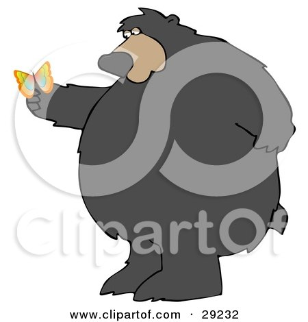 Big Chubby Wild Bear Standing On His Hind Legs, Gazing At A Butterfly On His Paw Posters, Art Prints