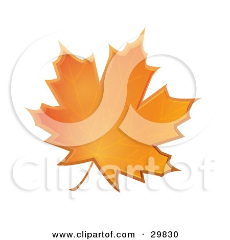 Clipart Illustration of an Orange Autumn Maple Leaf by Melisende Vector