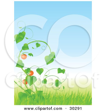 Clipart Illustration of Tomatoes Growing On A Lush Green Vine In Tall Grass, Under A Blue Sky  by elaineitalia