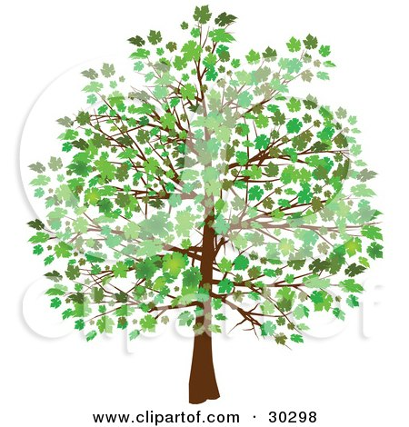 Royalty free rf growing tree clipart illustrations - Leaves paintings and drawings ...