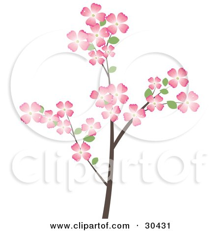 Clipart Illustration Of A Flowering Dogwood Tree Branch