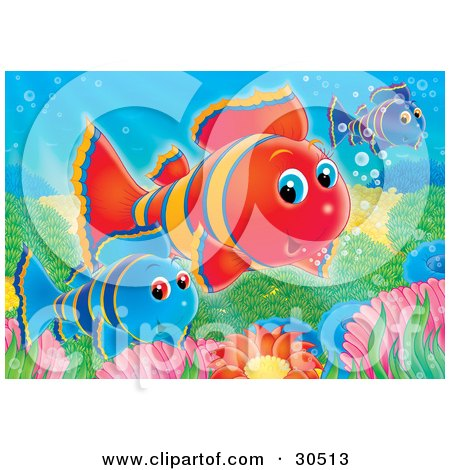Clipart Illustration of Blue, Red And Purple Clownfish Swimming Over Anemones On A Reef by Alex Bannykh