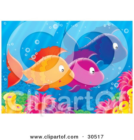 Clipart Illustration of a Group Of Three Schooling Orange, Purple And Blue Fish Near Sea Anemones by Alex Bannykh