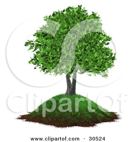 Clipart Illustration of a Realistic 3D Tree With Lush Green Leaves, Growing On A Grassy Hill With Dirt Along The Bottom by Frog974
