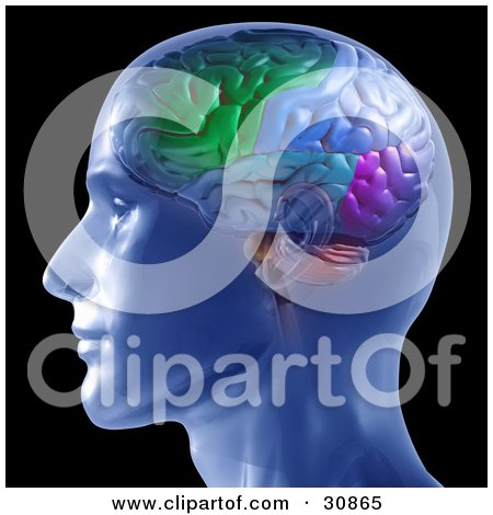 Clipart Illustration of a 3d Rendered Man In Profile, Showing A Colorful Brain by Tonis Pan