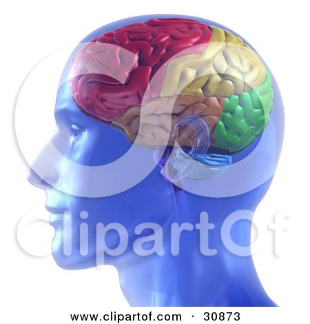 Clipart Illustration of a 3d Rendered Transparent Blue Man With A Colorful Brain by Tonis Pan