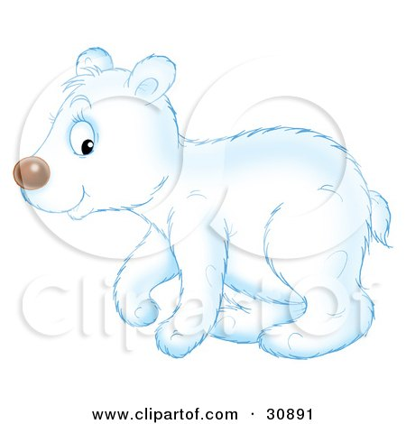 Cute Polar Bear Cub In Profile, Walking To The Left Posters, Art Prints