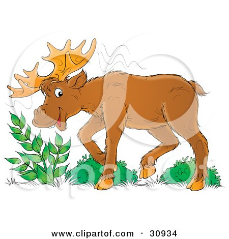 Clipart Illustration of a Moose Eating Leafy Green Plants ...
