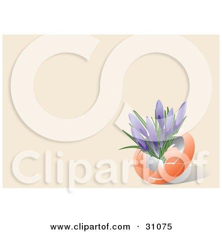 Clipart Illustration of Purple Crocus Flowers Growing Inside An Orange Egg Shell, On A Pastel Orange Background by Eugene