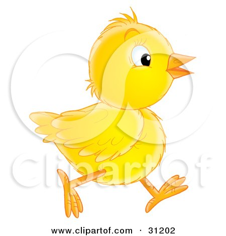 Yellow Baby Chick Running In Profile Posters, Art Prints