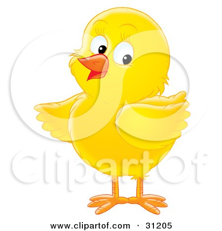 Adorable Yellow Chick Looking Back Posters, Art Prints