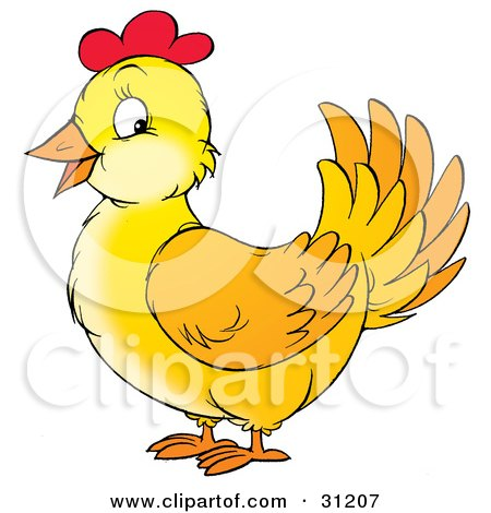 Friendly Yellow Chicken Hen With Red On Her Head Posters, Art Prints