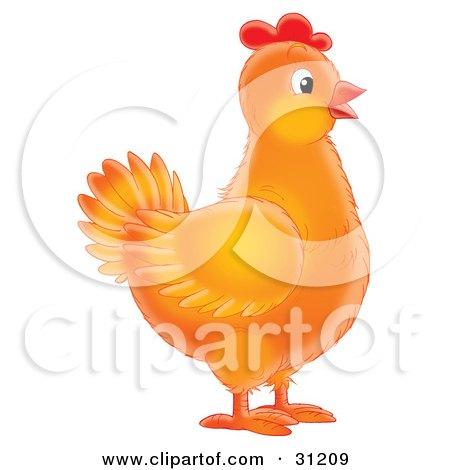 Orange Female Chicken In Profile Posters, Art Prints