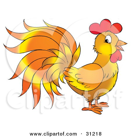 Rooster With Orange And Yellow Feathers, Standing In Profile Posters, Art Prints