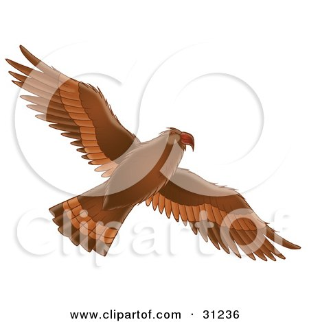 Clipart Illustration of a Flying Brown Hawk With Its Wings Spanned, As Seen From Below by Alex Bannykh