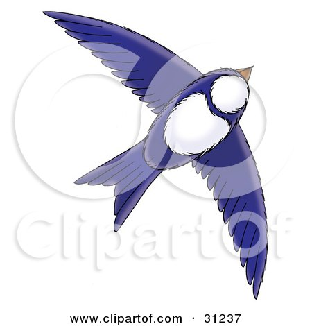 Blue And White Bird Flying Through The Sky, On A White Background Posters, Art Prints