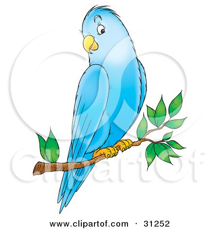 Friendly Blue Parakeet Perched On A Tree Branch Posters, Art Prints