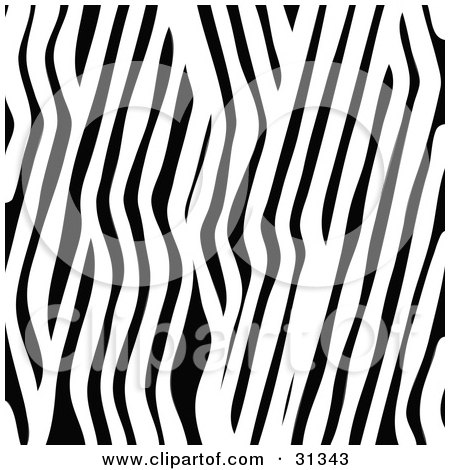 black and white zebra stripes. a Black and White Stripes