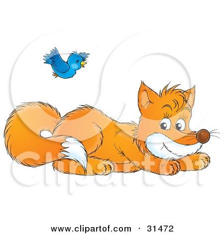 Blue Bird Flying Over A Playful Fox Kit Posters, Art Prints