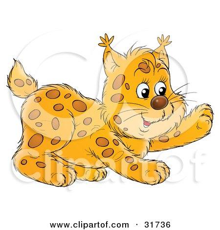 Clipart Illustration of a Frisky Bobcat Cub Playing by Alex Bannykh