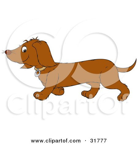 Clipart Illustration of a Dachshund Dog In Profile, Walking To The Left by Alex Bannykh