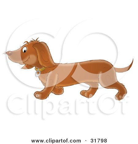 Adorable Brown Dackel Dog Walking To The Left Posters, Art Prints