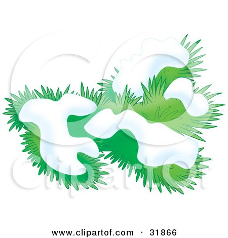 Clipart Illustration of a Snow Flocked Evergreen Tree Branch by Alex Bannykh