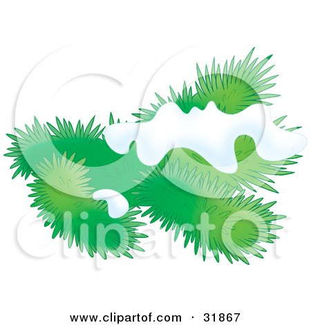 Clipart Illustration of an Evergreen Tree Branch Flocked In Snow by Alex Bannykh