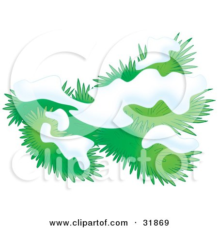 Clipart Illustration of Snow On An Evergreen Tree Branch by Alex Bannykh