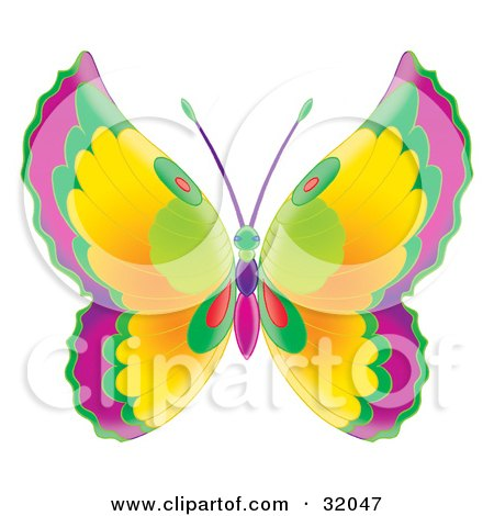 Butterfly With Purple, Green, Red And Yellow Wings And A Green, Pink ...