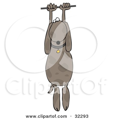 Clipart Illustration of a Helpless Brown Dog Hanging From a Wire by djart