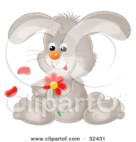 Clipart Illustration of a Cute Gray Bunny Rabbit Sitting And Picking Petals Off Of A Red Daisy Flower by Alex Bannykh