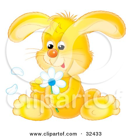 Cute Yellow Bunny Rabbit Sitting And Picking Petals Off Of A White Daisy Flower Posters, Art Prints