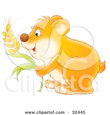 Clipart Illustration of a Hungry Orange Hamster Stuffing Wheat Grains Into His Cheeks by Alex Bannykh