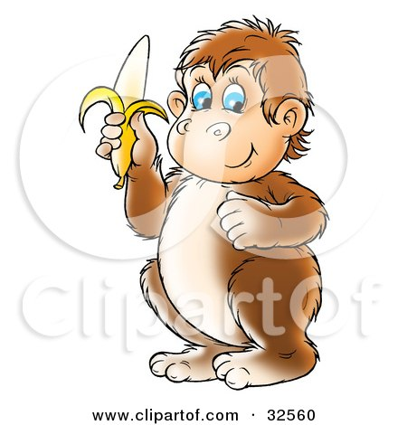Brown, Chubby, Blue Eyed Monkey Holding A Banana Posters, Art Prints