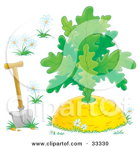 Clipart Illustration of a Shovel In The Ground With White Flowers, Around A Giant Turnip by Alex Bannykh