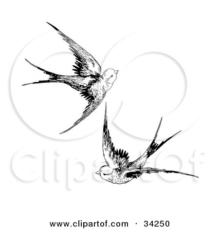 Sparrow Drawing Flying