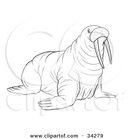 Clipart Illustration of a Black And White Outline Of A Big Walrus With Tusks by YUHAIZAN YUNUS