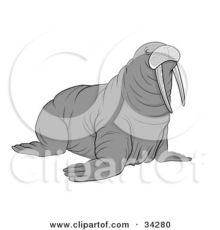 Clipart Illustration of a Large Gray Tusked Walrus by YUHAIZAN YUNUS