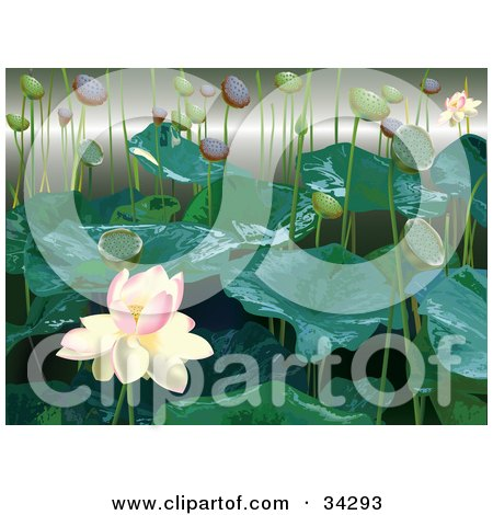 Clipart Illustration of a White And Pink Lotus Flower With Lily Buds And Leaves by Eugene