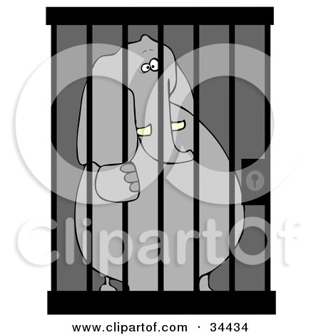 Jailed Elephant Behind Bars In A Prison Cell Posters, Art Prints