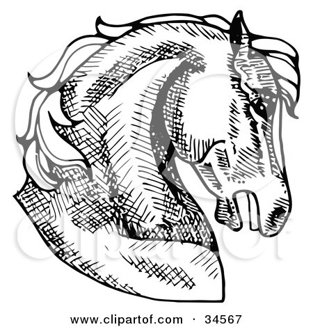 Clipart Illustration Of A Muscular Horses Head In Profile Facing Right By C Charley Franzwa