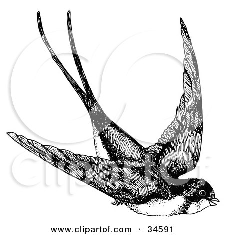 Clipart Illustration of a Flying Swallow Swooping Down While In Flight by C Charley-Franzwa