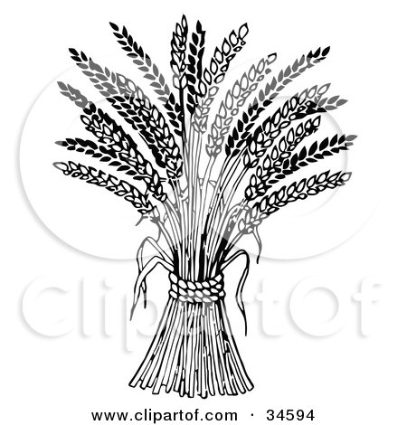 Clipart Illustration of Wheat Bound By Rope by C Charley-Franzwa