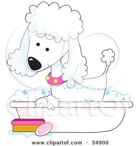 Clipart Illustration of a Cute White Poodle In A Pink Collar, Taking A Sudsy Bubble Bath In A Tub by Maria Bell