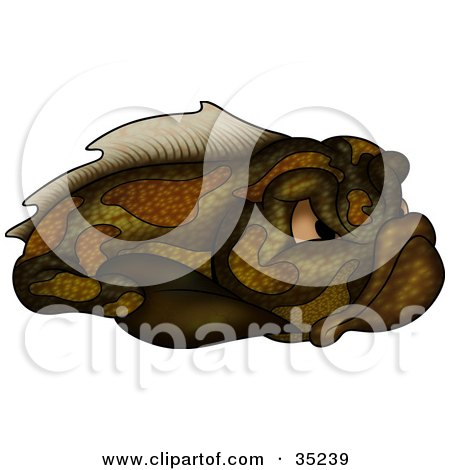 Clipart Illustration of a Grouchy Brown And Green Fish With Mean Eyes by dero