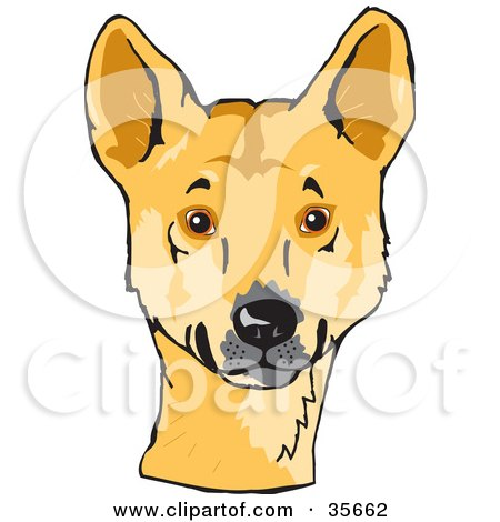 Clipart Illustration of an Alert Decker Dog (Canis Lupus Ding) Looking At The Viewer by Dennis Holmes Designs