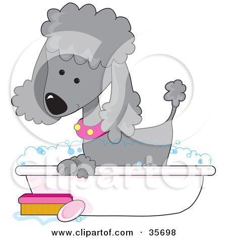Clipart Illustration of a Cute Silver Poodle In A Pink Collar, Taking A Sudsy Bubble Bath In A Tub by Maria Bell