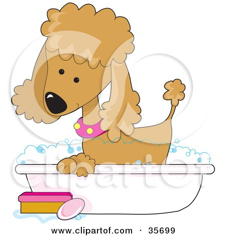 Clipart Illustration of a Cute Apricot Poodle In A Pink Collar, Taking A Sudsy Bubble Bath In A Tub by Maria Bell
